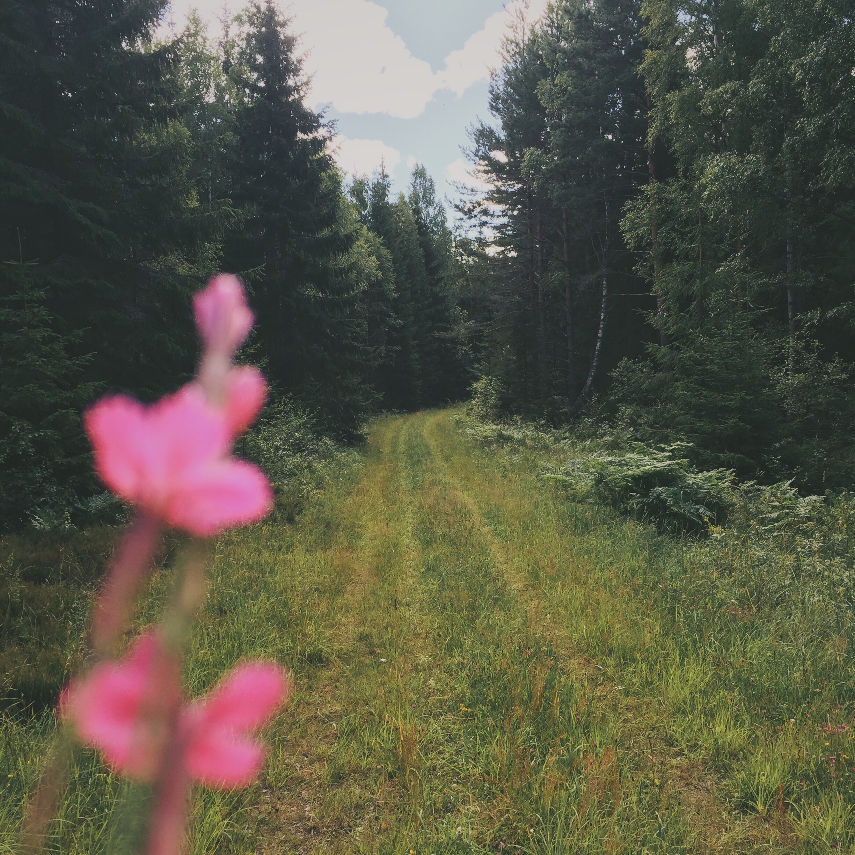 Skog-EmmaHåkansson